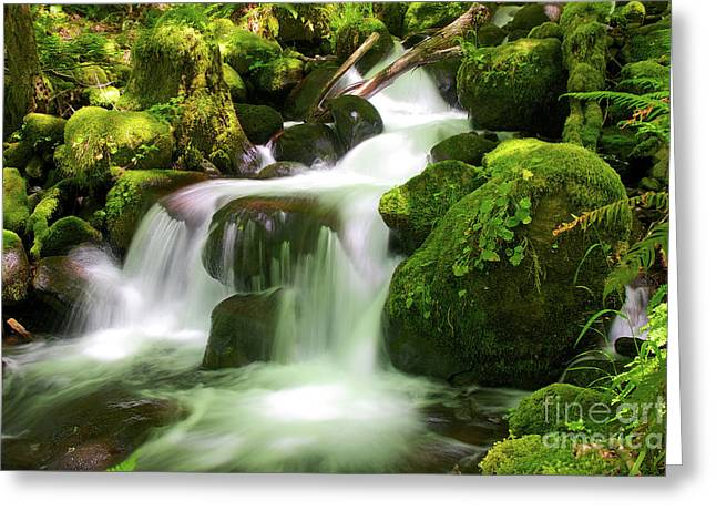 Columbia Gorge Stream Greeting Card