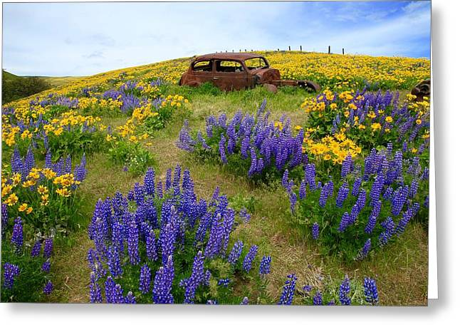 Columbia Hills Wildflowers Greeting Card