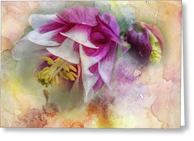 Columbine Blossom In Magenta And White #1 Greeting Card by Mother Nature