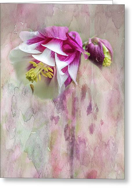 Columbine Blossom In Magenta And White Greeting Card by Mother Nature