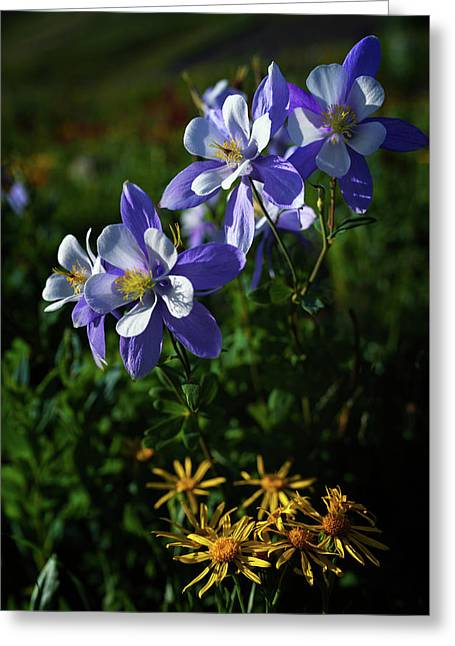 Columbine Colorado Greeting Card by Mike Berenson