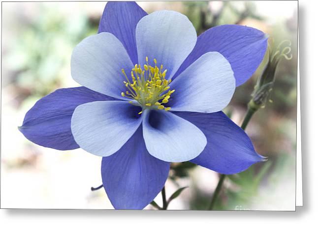 Columbine - Colorado State Flower Greeting Card