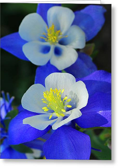 Columbine Day Greeting Card