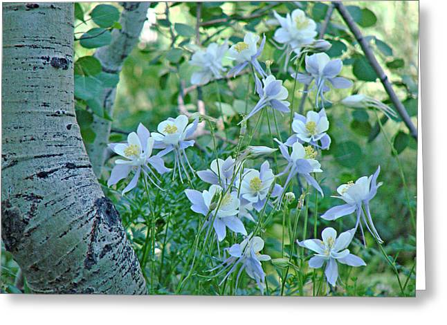 Columbine Meadow Greeting Card