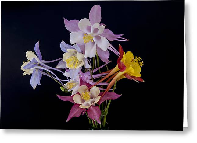 Greeting Card featuring the photograph Columbine Medley by Gary Lengyel
