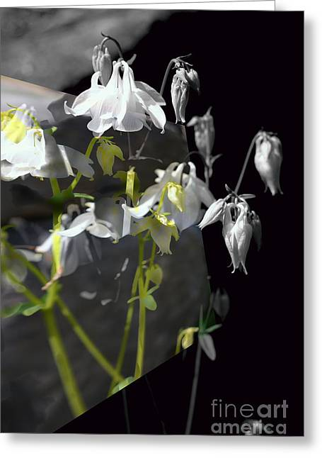 Columbine Shades Of Grey Greeting Card
