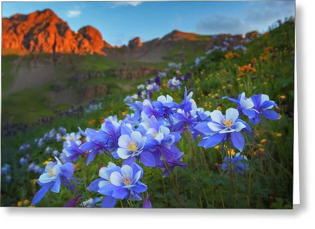 Columbine Sunrise Greeting Card