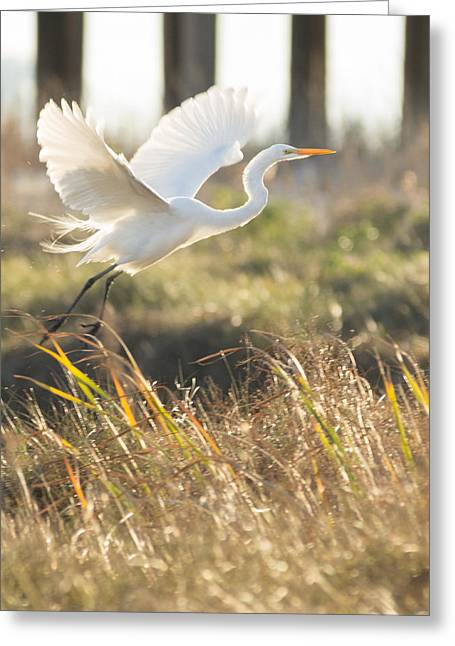 Greeting Card featuring the photograph Come Fly With Me by Julie Andel