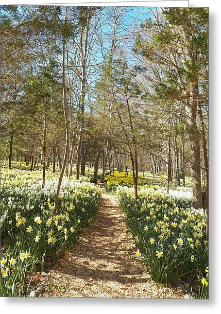 Come Walk Among The Daffodils Greeting Card