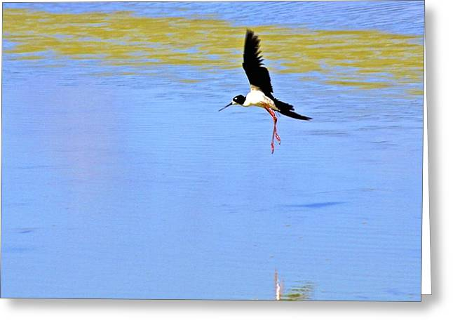 Coming In For A Landing Greeting Card by Mele Jean Willow