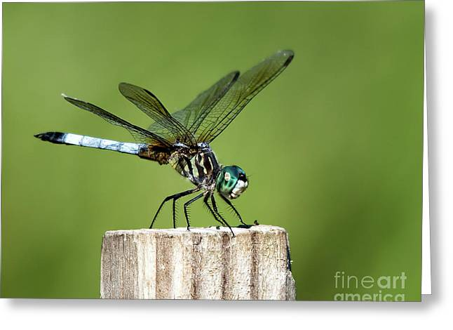 Coming In For A Landing Greeting Card by Patti Larson