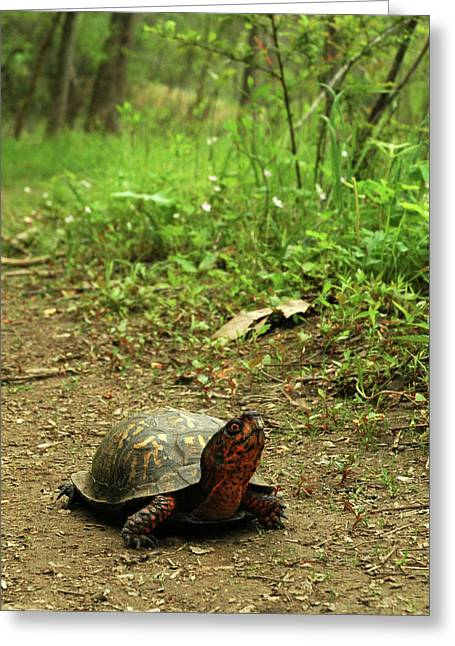 Coming Out Of My Shell. Greeting Card