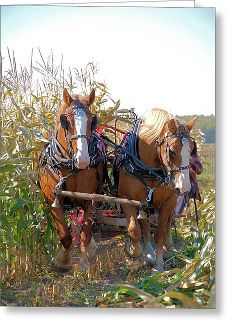 Coming Through The Corn Greeting Card by Valerie Kirkwood