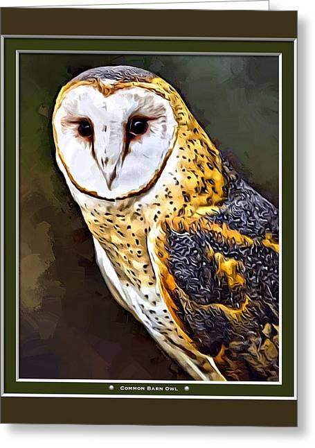 Common Barn Owl Print Greeting Card by Scott Wallace