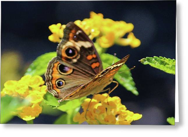 Common Buckeye On Flower Greeting Card by Cynthia Guinn
