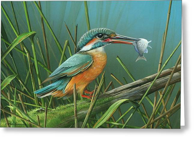 Common Kingfisher Greeting Card