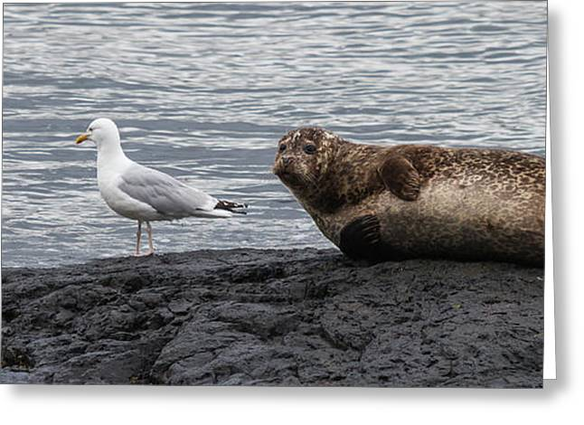 Common Seal And The Gull Greeting Card