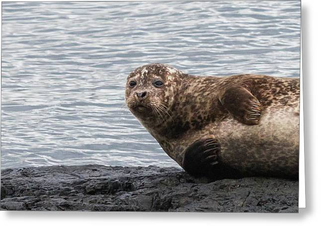Common Seal Portrait Greeting Card