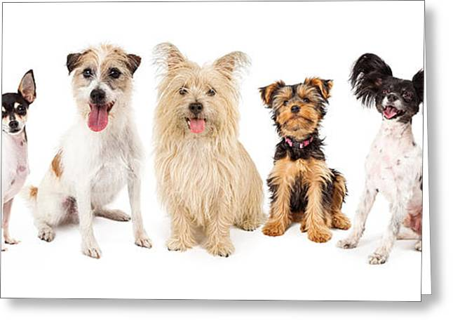 Common Small Breed Dogs Greeting Card