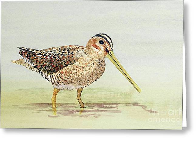 Greeting Card featuring the painting Common Snipe Wading by Thom Glace