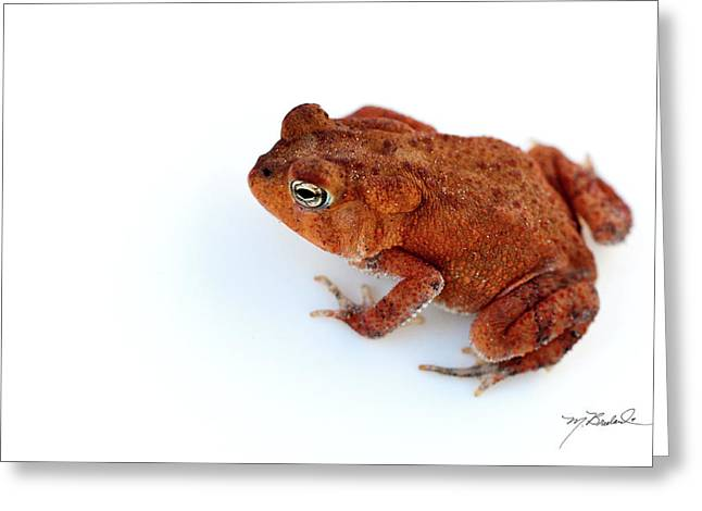 Common Yard Toad Greeting Card by Melissa Wyatt