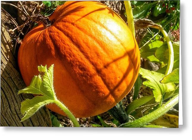 Community Garden Pumpkin Greeting Card