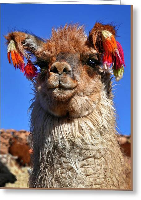 Greeting Card featuring the photograph Como Se Llama by Skip Hunt