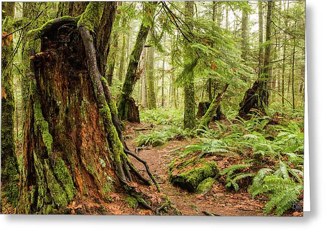 Comox Valley Forrest-3 Greeting Card