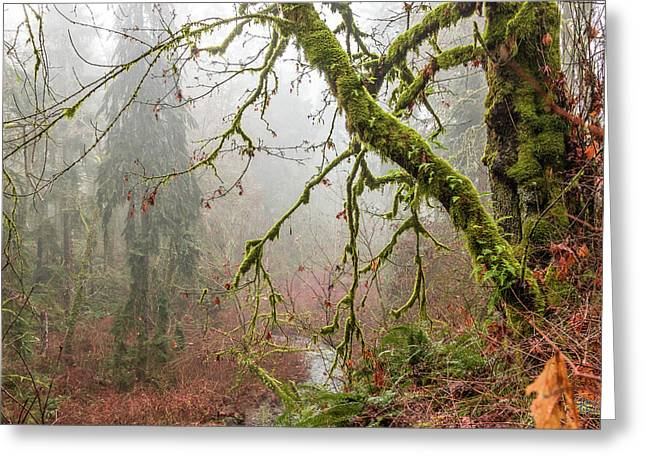 Mist In The Forest Greeting Card