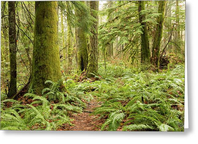 Comox Valley Forrest-5 Greeting Card