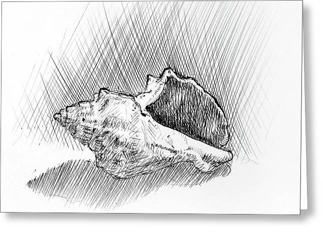Conch A Pen And Ink Drawing  Greeting Card by Adam Long