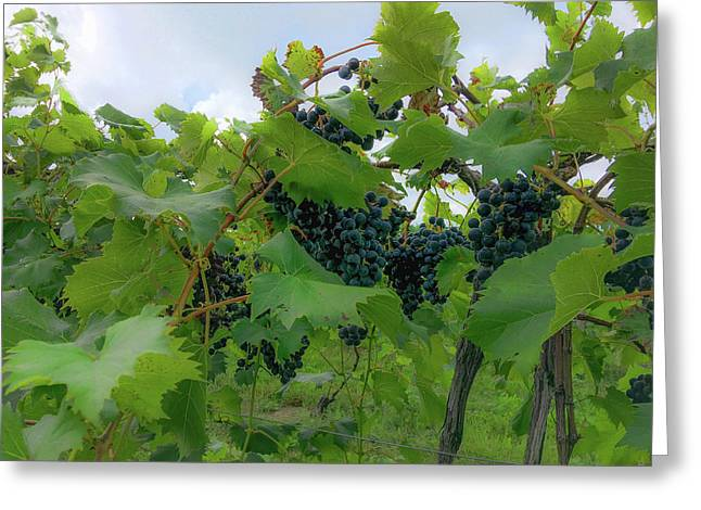 Concord Grapes Greeting Card by Cheri Ottenbaker
