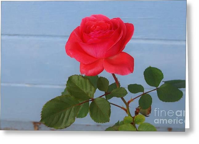 Concrete Rose Greeting Card