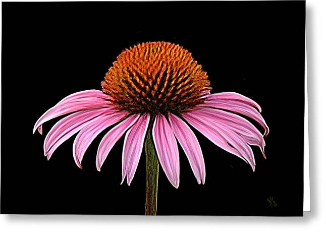 Cone Flower - Rudbeckia Greeting Card