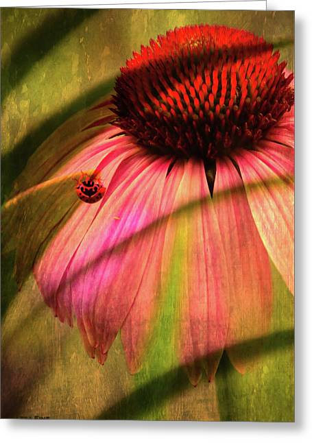 Cone Flower And The Ladybug Greeting Card