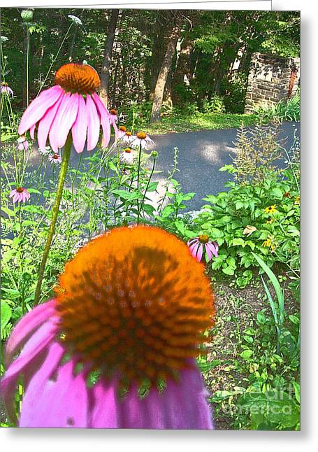 Cone Flowers And Others Greeting Card by Beebe  Barksdale-Bruner