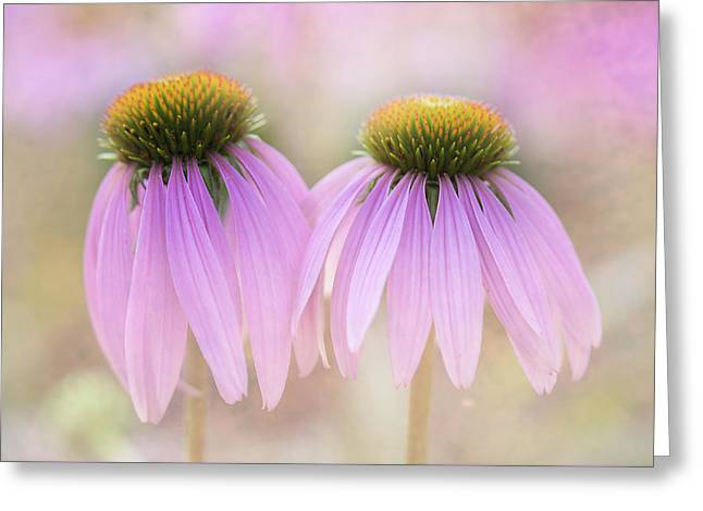 Cone Flowers Greeting Card by Jeff Klingler