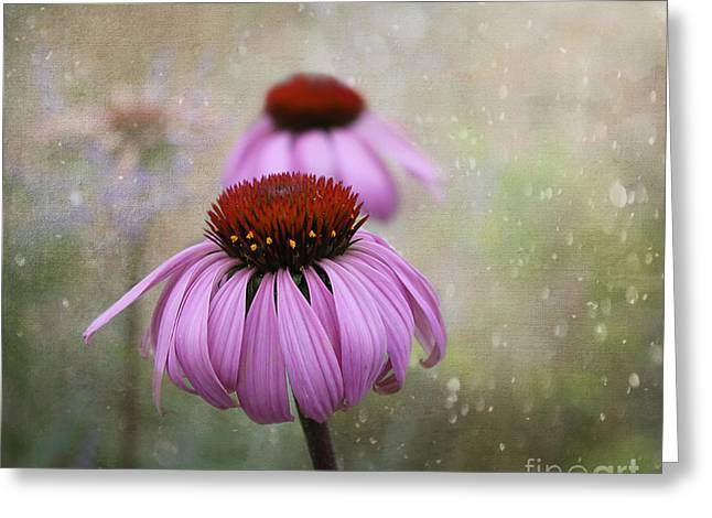 Coneflower Dream Greeting Card