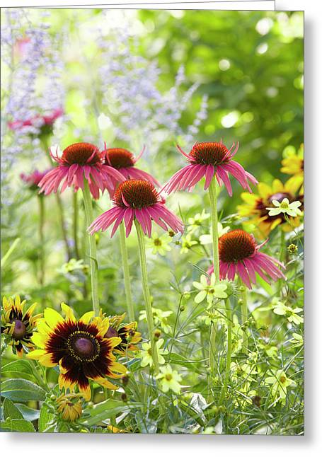 Coneflower Scene Greeting Card
