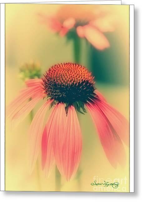 Coneflower Greeting Card by Susan  Lipschutz
