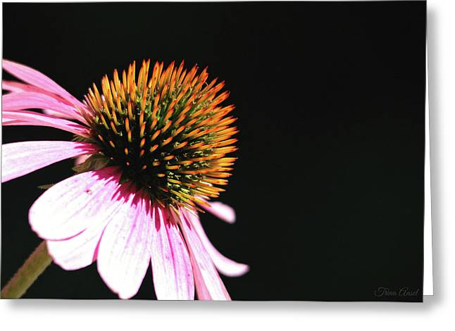 Greeting Card featuring the photograph Coneflower by Trina Ansel