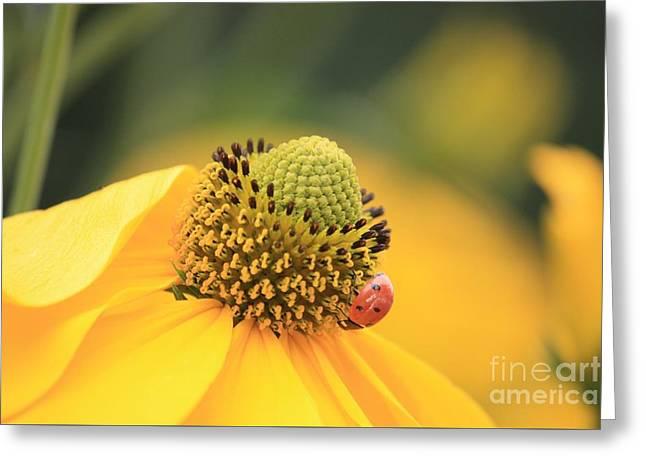 Coneflower With Ladybug Greeting Card by Carol Groenen