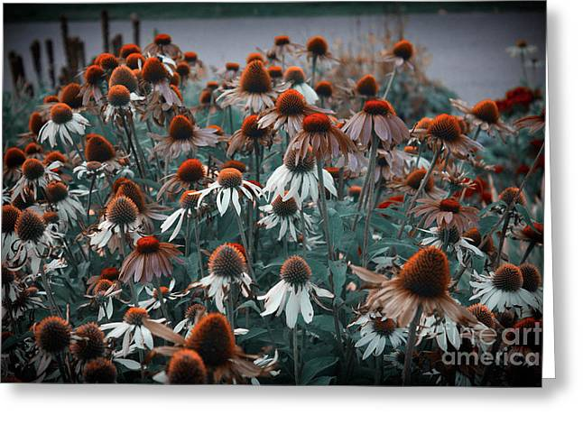 Coneflowers Bits Of Torquise Greeting Card