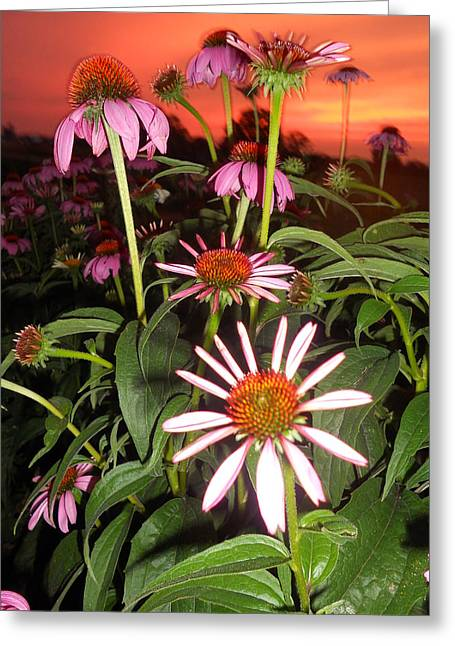 Coneflowers I Greeting Card by Cindy Treger