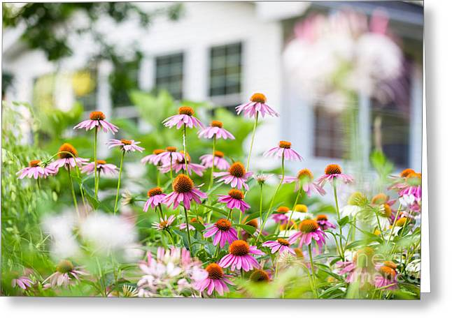 Coneflowers In Bloom In A Summer Backyard Garden Outside Of A Su Greeting Card by Leslie Banks