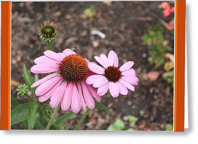 Coneflowers Greeting Card by Susan Alvaro