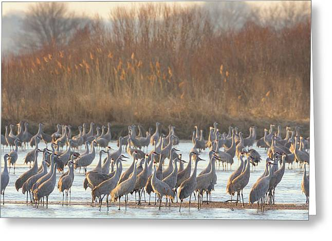 Congregration On The Platte Greeting Card