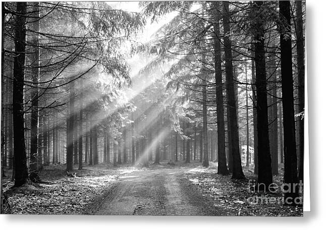 Conifer Forest In Fog Greeting Card