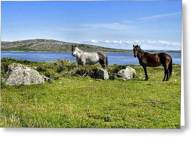 Connemara Ponies Greeting Card