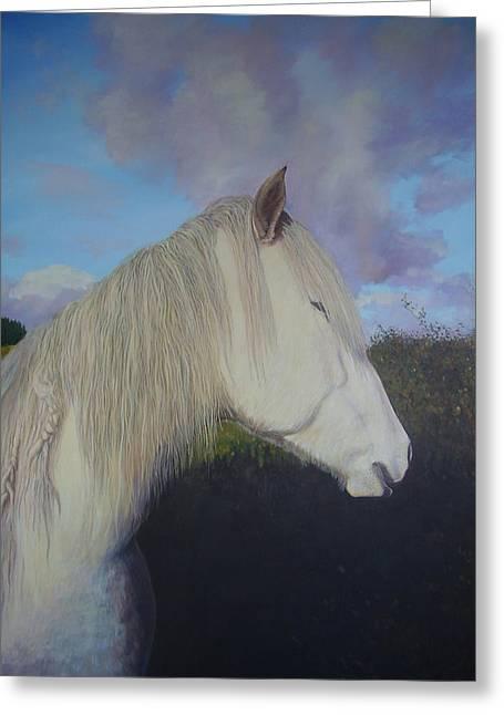 Connemara Pony Greeting Card by Eamon Doyle